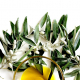 benefícios do azeite olive oil health benefits